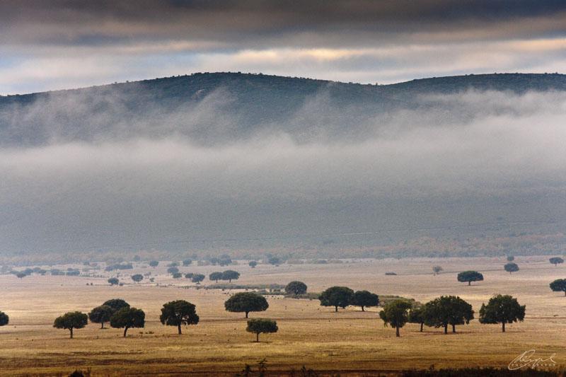Niebla en Cabañeros
